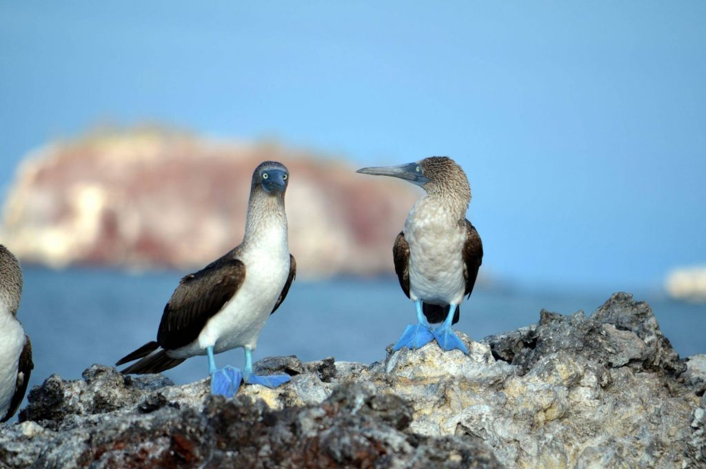 The Wildlife of The Galapagos